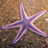 starfish1412